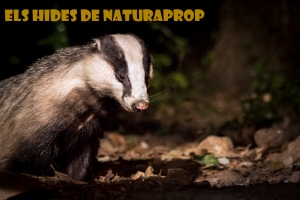 naturapropbloc
