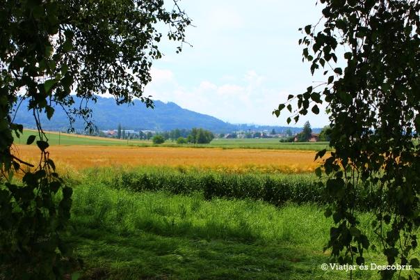 A Jegenstorf hi ha moltes granges i camps de conreu.
