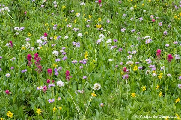 Tot el camí està ben ple de flors florides.