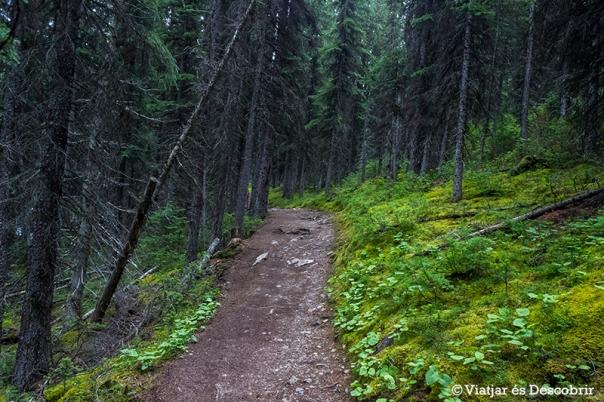 El camí passa per l'interior d'un bosc, on sovint hi ha óssos.