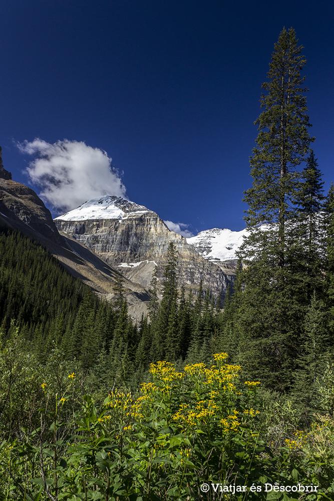 Al llarg del camí tenim unes vistes increïbles del Victoria Glacier i les muntanyes.