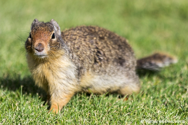 Al arribar a baix, ens trobem de nou amb els simpàtics esquirols.
