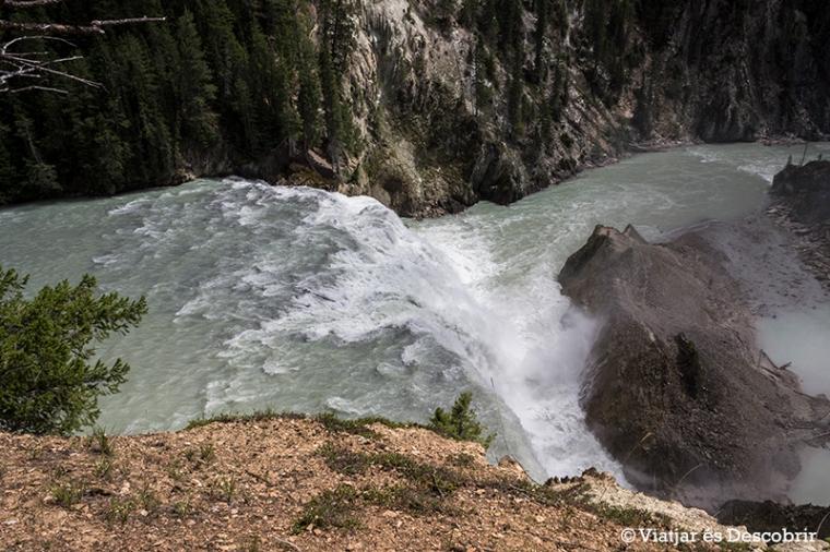 La primera visió de les Wapta falls és des de dalt.
