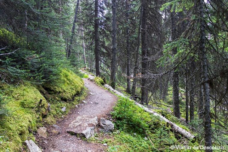 Aleshores el camí passa per l'interior d'un bosc.
