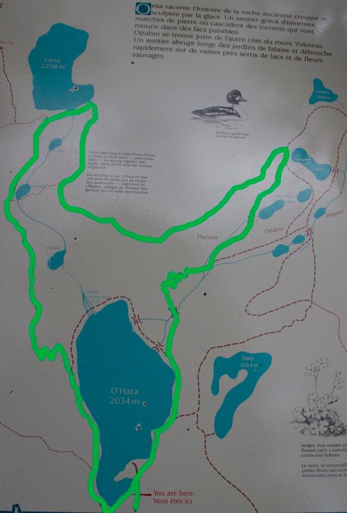 Aquest és el camí que decidim fer un cop arribem al Lake O'Hara. Té una duració d'uns 10 quilòmetres.
