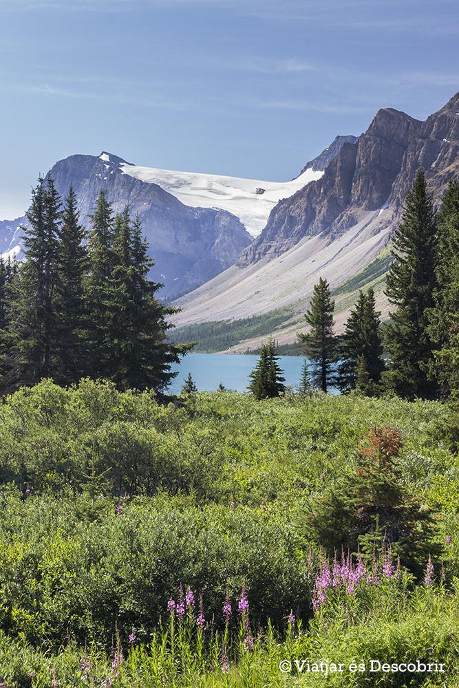 Crowfoot Glacier Viewpoint