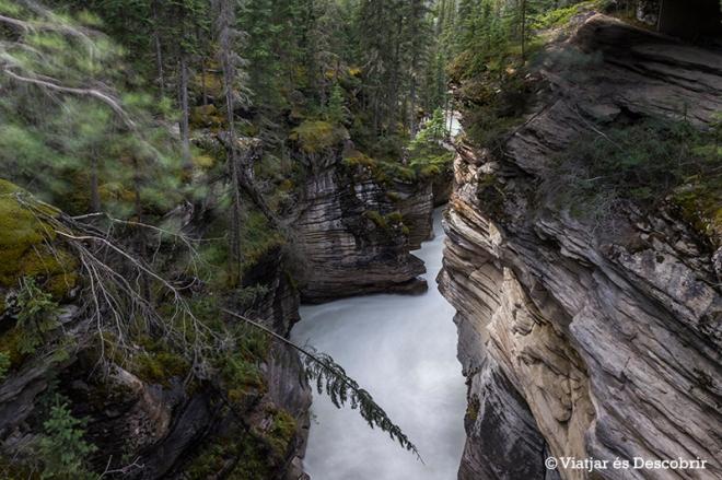 L'aigua que cau per l'Athabasca fall continua el seu curs per un canyó preciós.