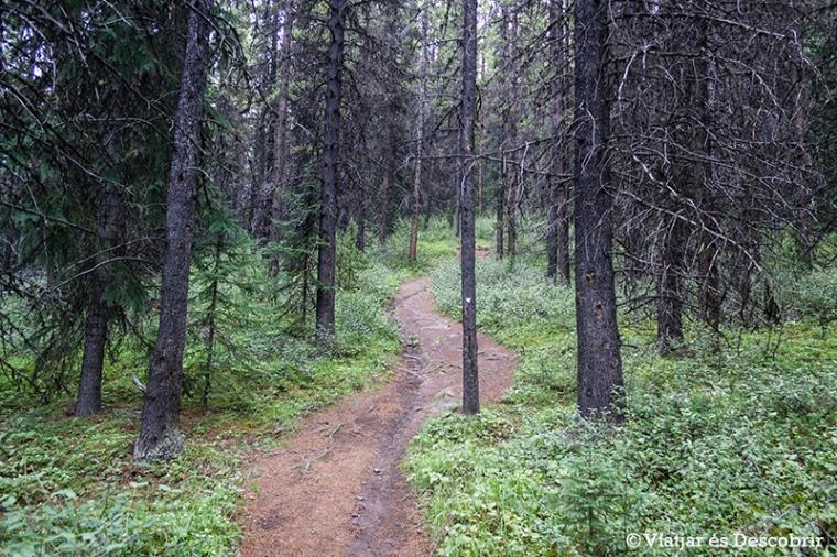 La primera part del recorregut passa per un bosc molt topit.