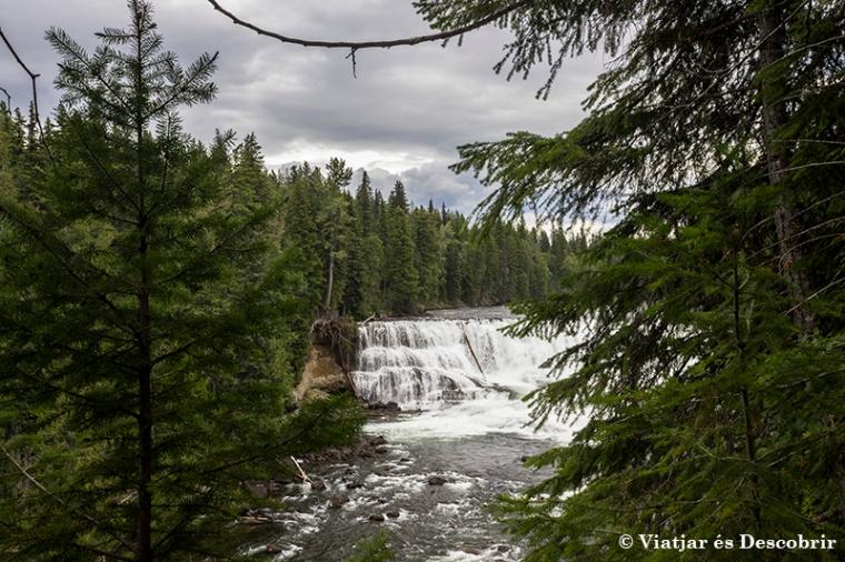 Les Dawson Falls són unes cascades de 20 metres d'alçada i 60 d'amplada. Quanta aigua!