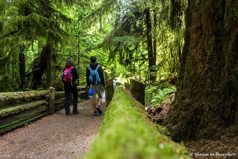 Caminar per Cathedral Grove és fascinant. Sembla un bosc encantat!