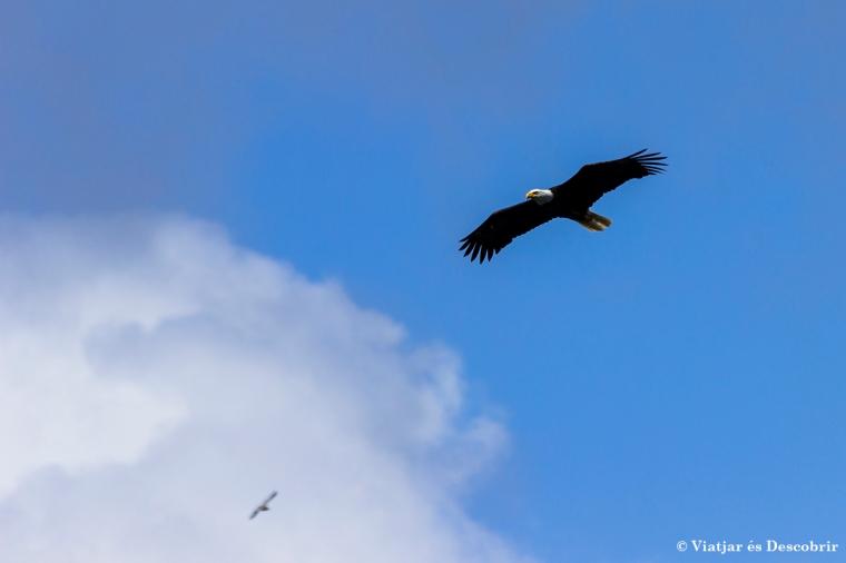 Per fi podem veure les famoses Balg Eagles!