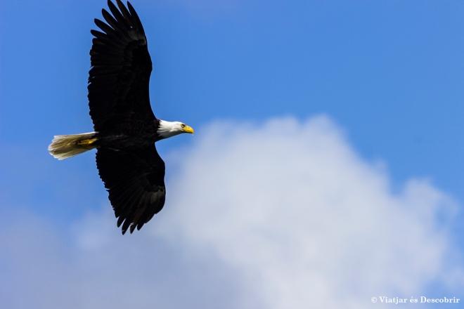 Balg Eagle 2