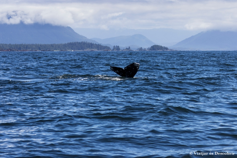 Balena grisa