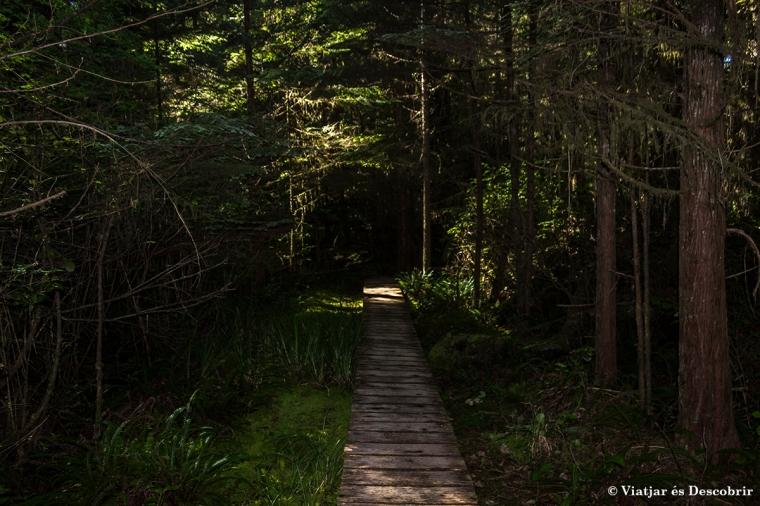 Caminem pel bosc plujós del Pacific Rim National Park.