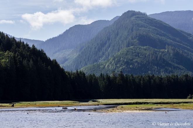 La zona del Knight Inlet és ideal per veure-hi óssos.
