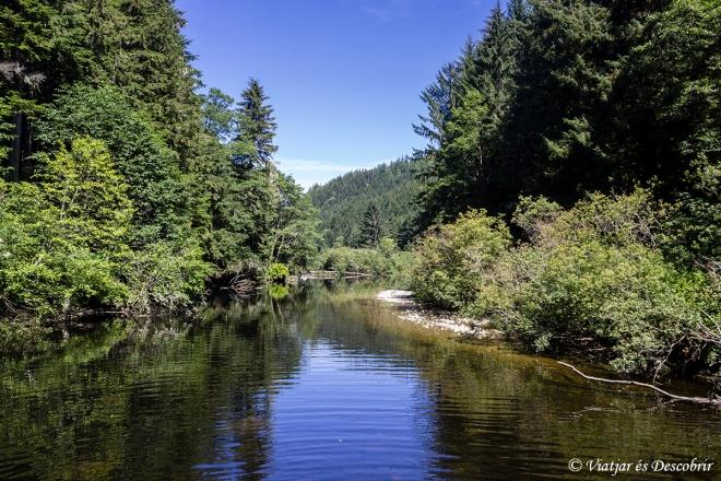 Ens endinsem a un bosc, seguint el curs del riu.