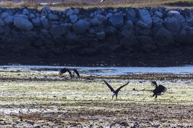 A l'esquerre del port, hi trobem molts ocells.