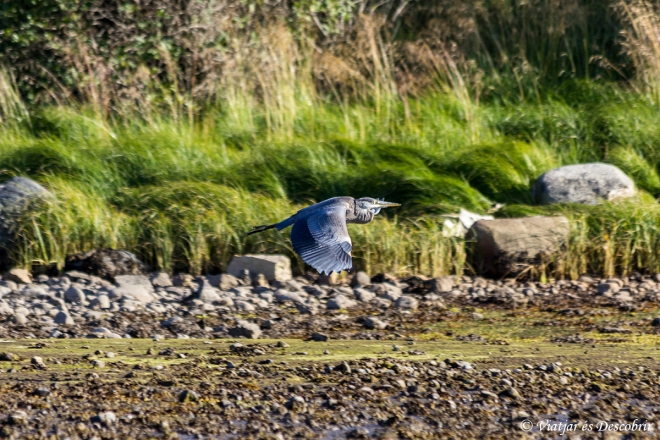 Port McNeill birds