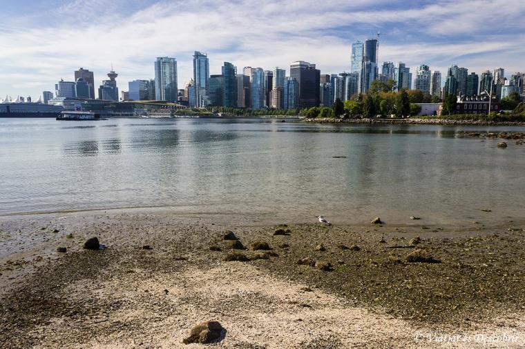 Tenim unes vistes precioses de Vancouver.