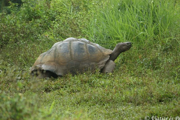Tortuga gigante Galàpagos