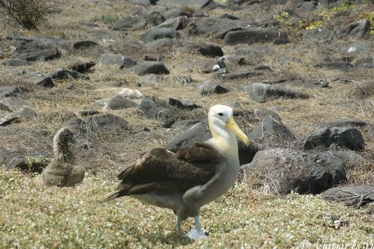 Els albatros, amb la seva elegància, van deixar-nos impressionats.