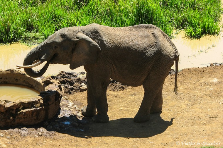 elefant-kenya