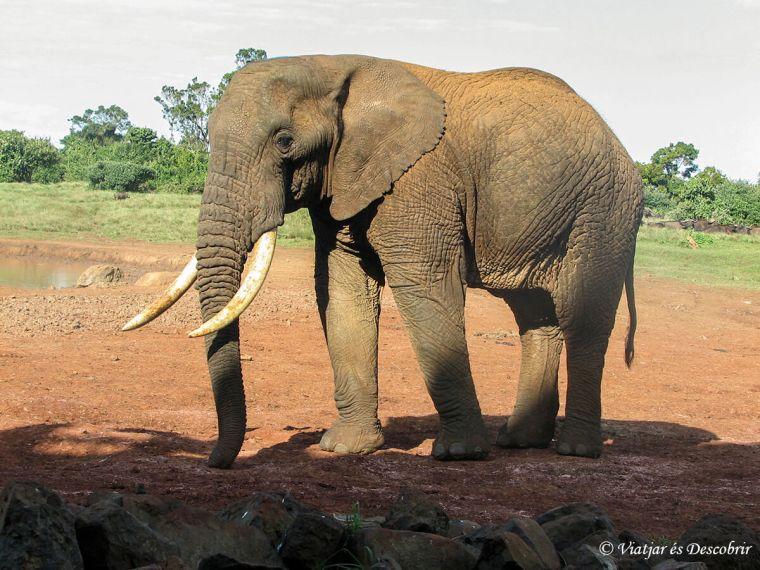 kenya-elefant-aberdares