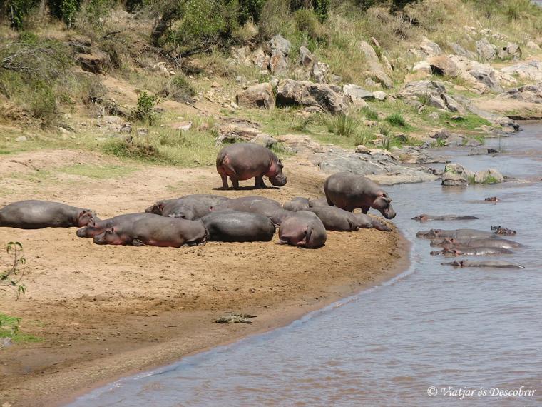 kenya-mara-hipopotam
