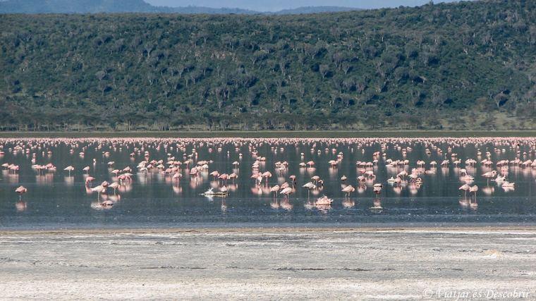 kenya-nakuru-llac