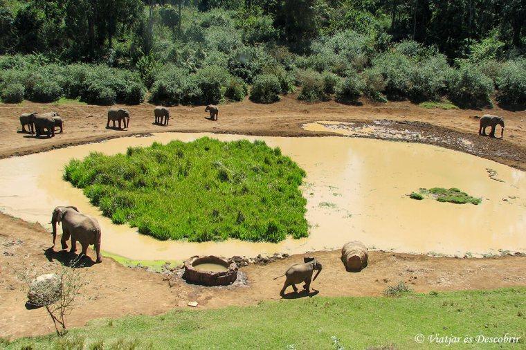 kenya-safari-aberdares