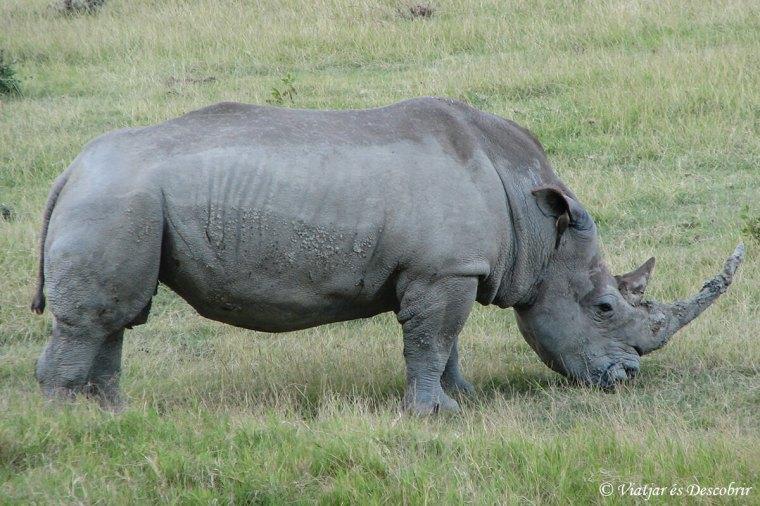 rinoceront-kenya-nakuru