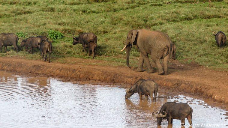 safari-kenya-bufals-elefants-aberdares