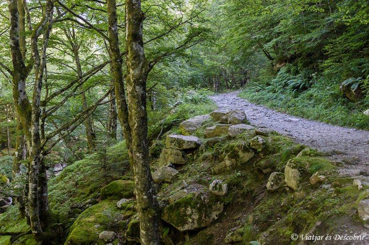 bosc-atlantic-pirineus