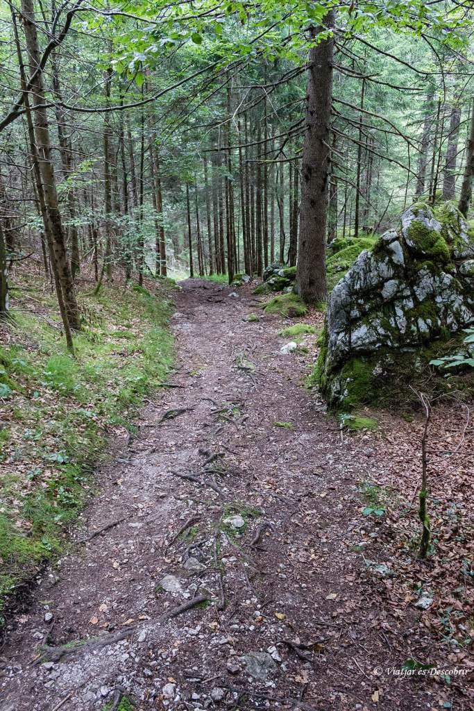 descubriendo los bosques de eslovenia