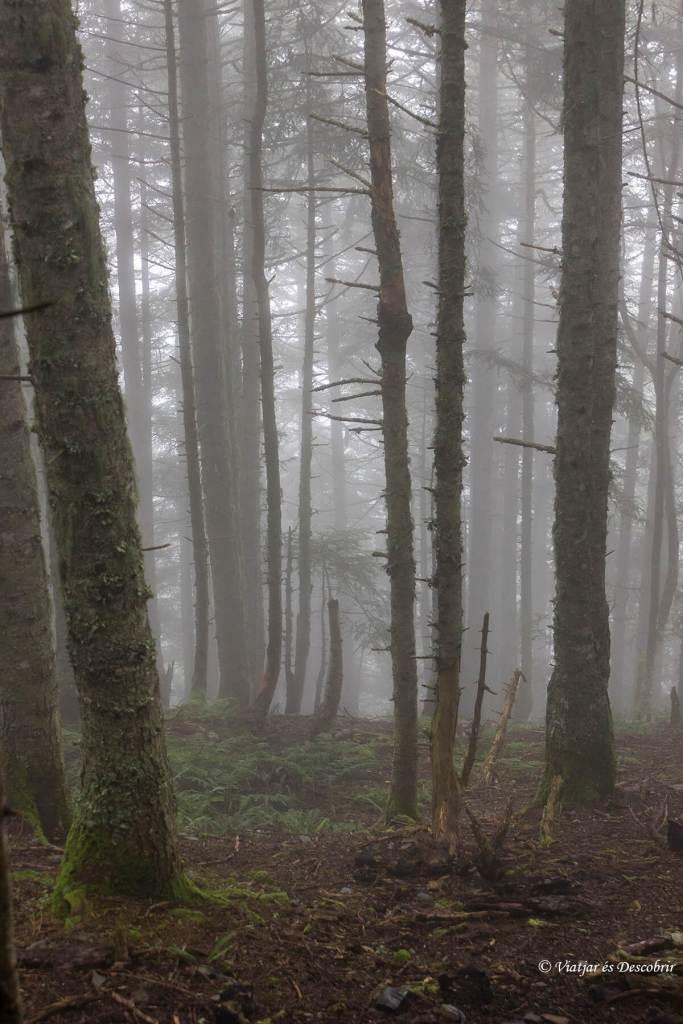 trekking-alt-pirineu