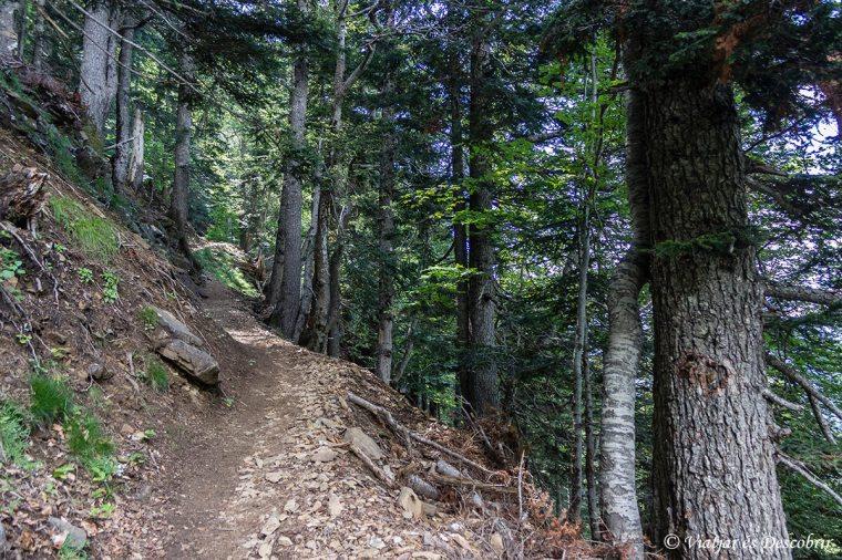 bosc de la senda de los cazadores