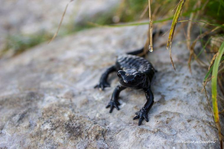 fauna durant excursio per eslovenia