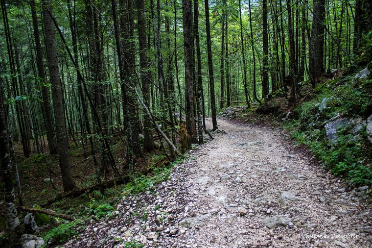 bosc i camí eslovens