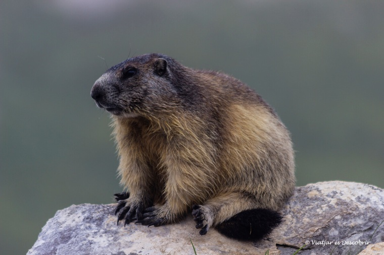 fauna al parc nacional triglav a eslovenia