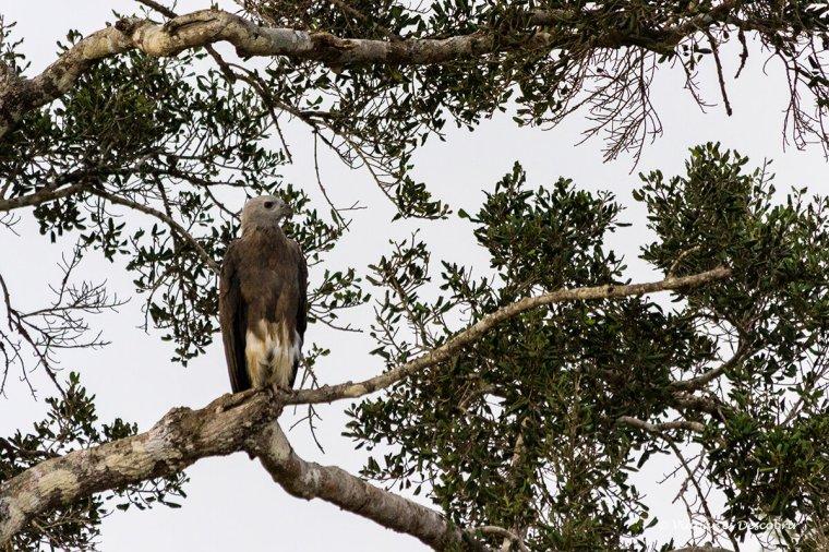 aus rapinyaires al wilpattu national park durant el safari