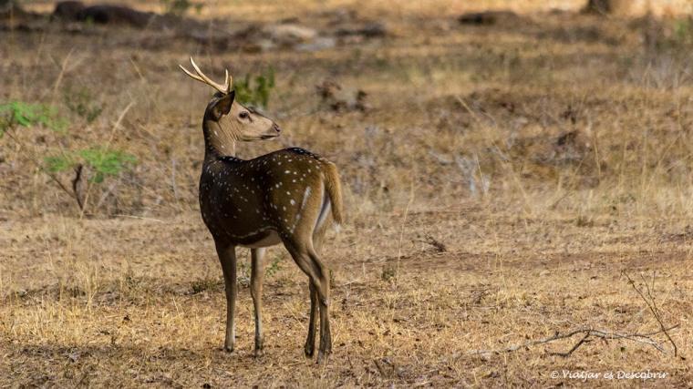 a wilpattu es poden fer alguns dels safaris més bonics de sri lanka