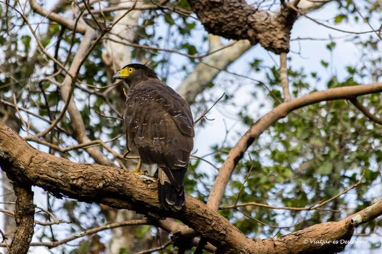 molts animals ens sorprenen durant el safari a wilpattu