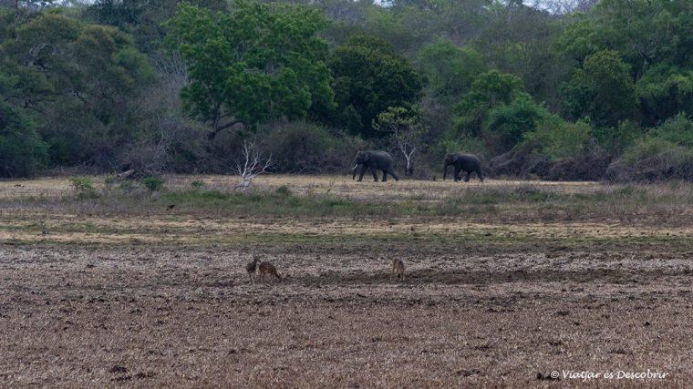 veure elefants a prop del parc nacional wilpattu