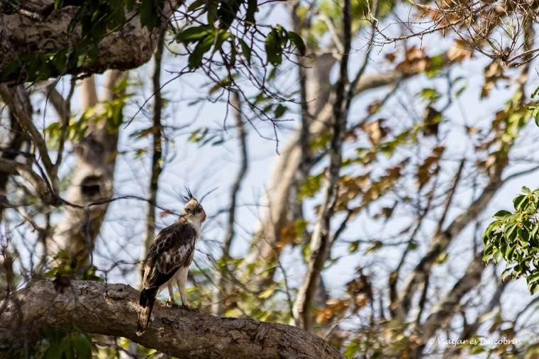 a wilpattu hi ha molta varietat d'ocells