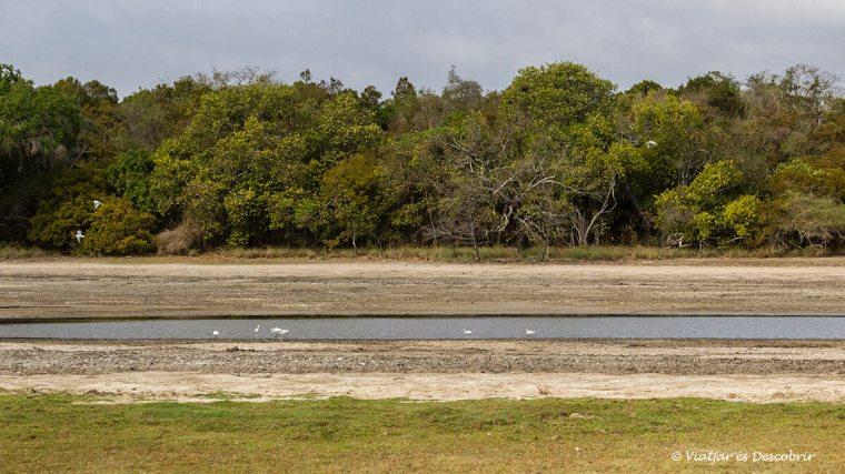 els llacs dibuixen el paisatge a Wilpattu
