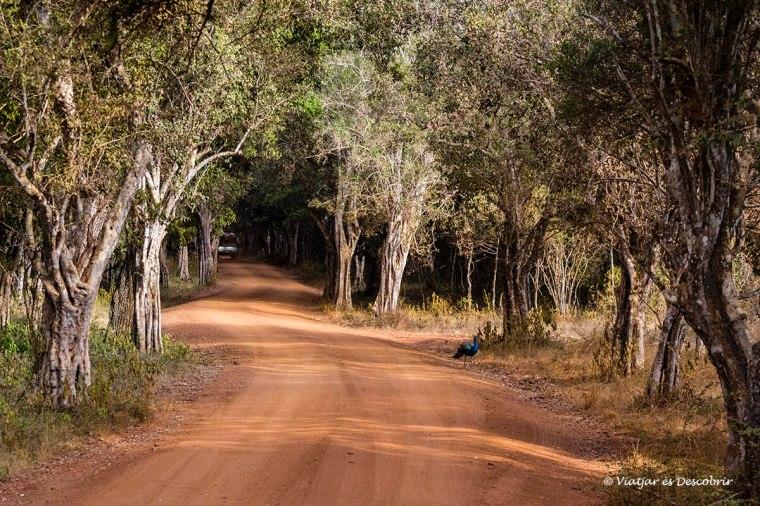 val la pena fer safaris durant un viatge a Sri Lanka