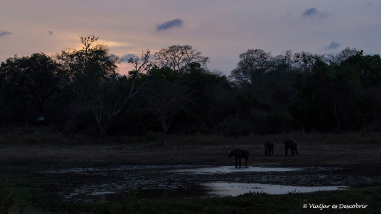 acabem el safari veient elefants durant el vespre