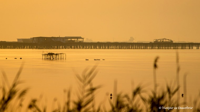 Llums de l'albada a un racó del Delta de l'Ebre