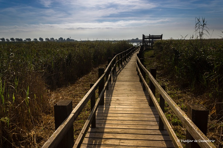 Als aguaits del Delta són racons on veure ocells de ben a prop