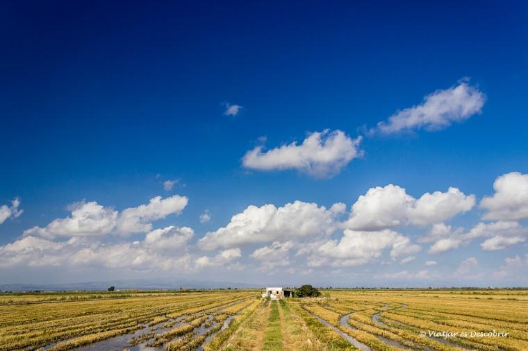 els camps d'arròs dibuixen els paisatges del Delta de l'Ebre